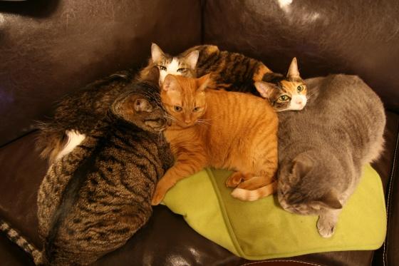 o7_garage_cats.jpg